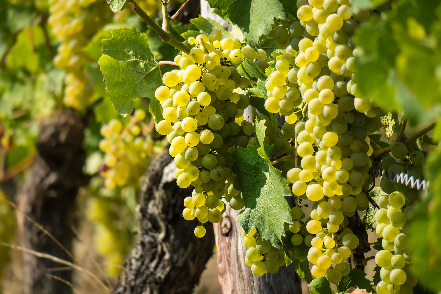 Schriftliche AnfrageBeratungsring für Obst- und Weinbau